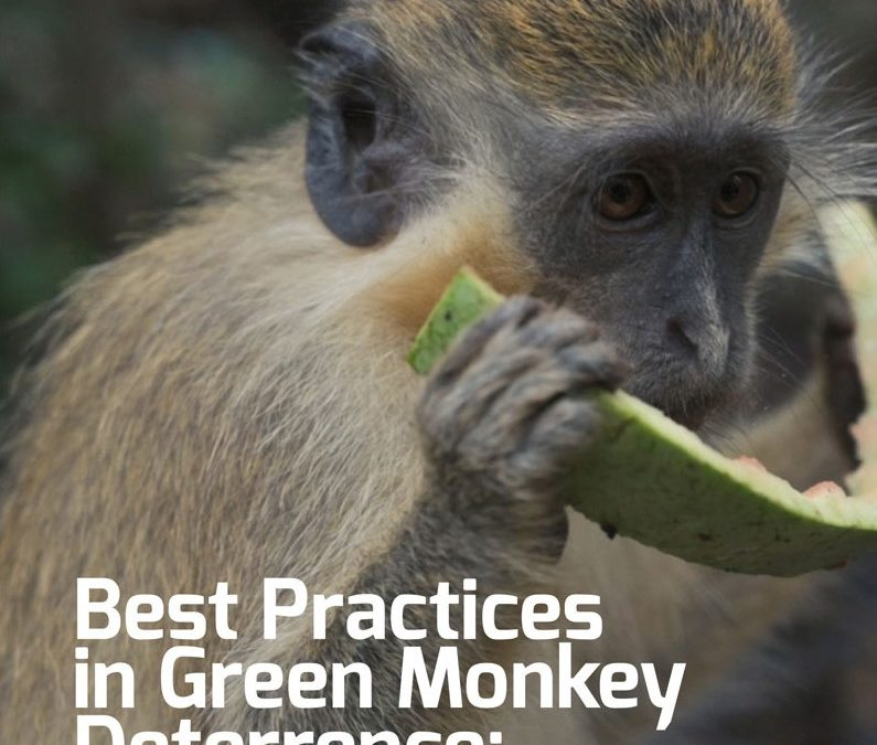 Monkey Deterrence Manual Available For Download