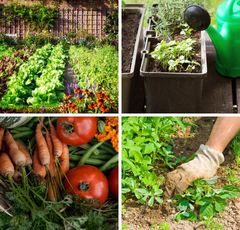 How To Start Your Backyard Garden | GIS