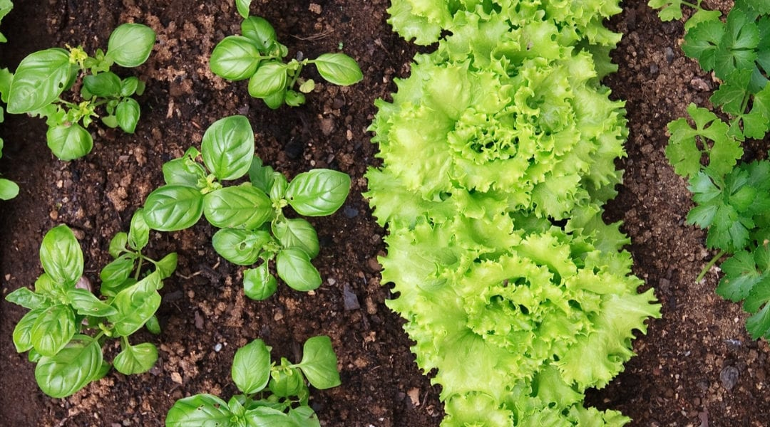 How To Start Your Backyard Garden