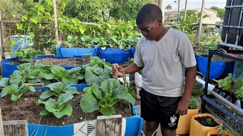 Thumbs Up For Urban Agricultural Programme