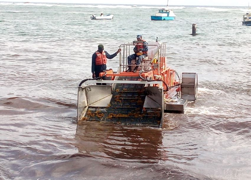 Collaborative Effort To Harvest Sargassum Seaweed