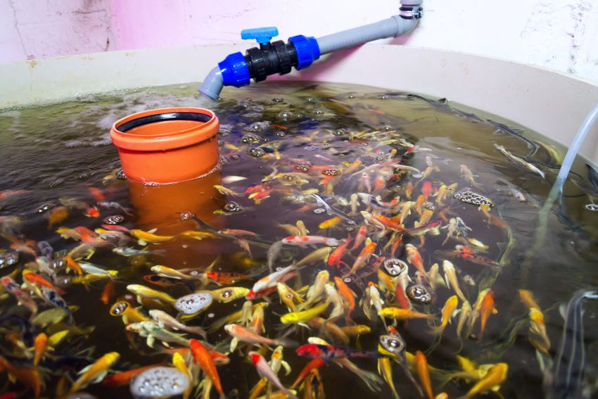 FAO-Funded Aquaponics Project Launched