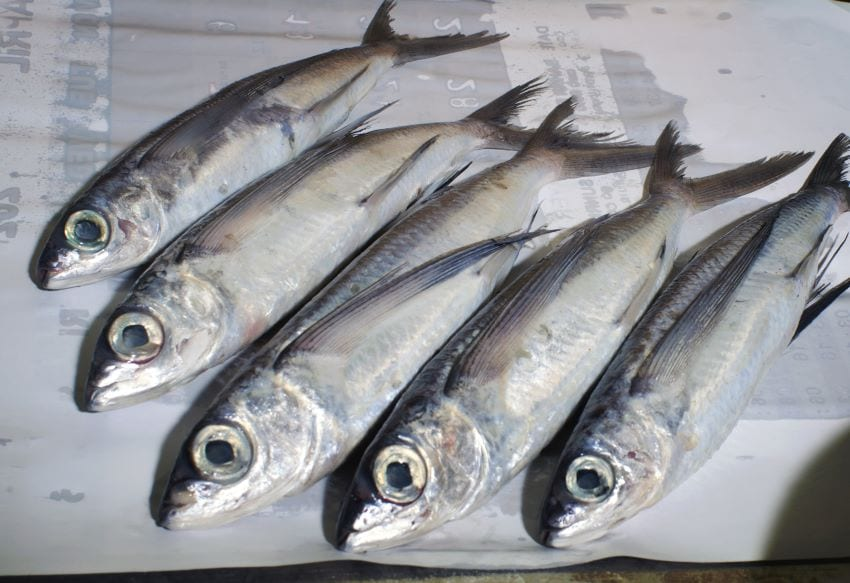 Change In Opening Hours For Fish Markets