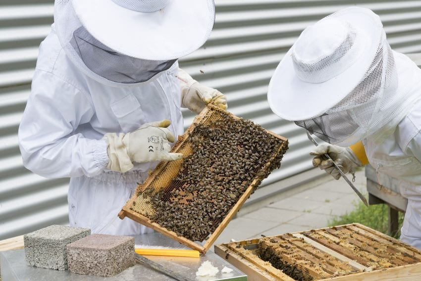 NCC Holding Beekeeping Classes; Register Now