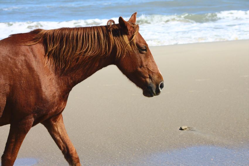 NCC: Horses Only Allowed On Certain Beaches
