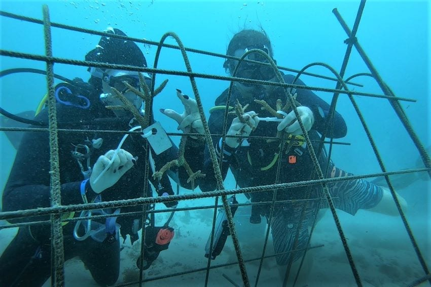 Effort Underway To Save Barbados' Coral Reefs