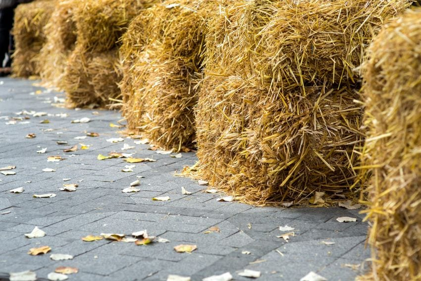 Hay Cubes Available At Animal Nutrition Unit
