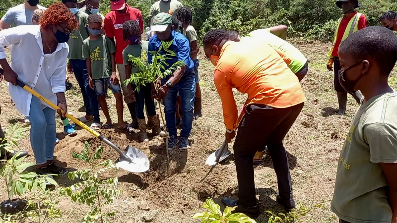 National Tree Planting Initiative Relaunched